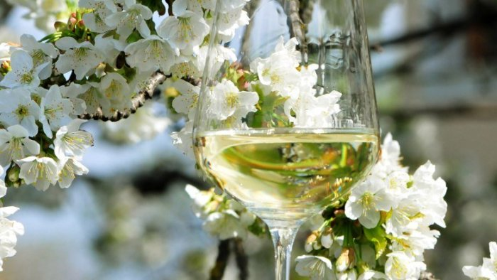 xwine-spring.jpeg.pagespeed.ic_.-qfIMsE_N8
